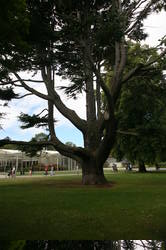 A last glimpse of green: the botanical gardens in Christchurch